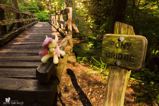 Flutterbat at Pony Bridge because PONY PONY PONY!