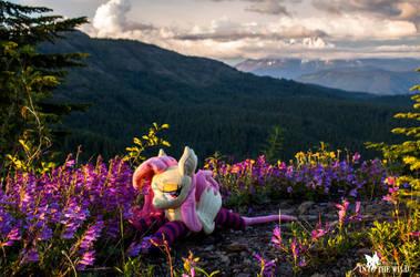 Mt Jefferson In Clouds, Flutterbat in the Flowers