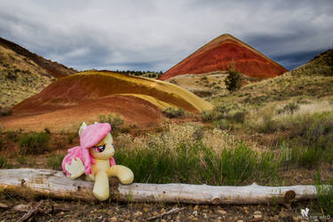 Flutterbat at the Red Hill in the Painted Hills