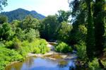 Summer Creek Scape