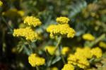 In the Yellow Sun