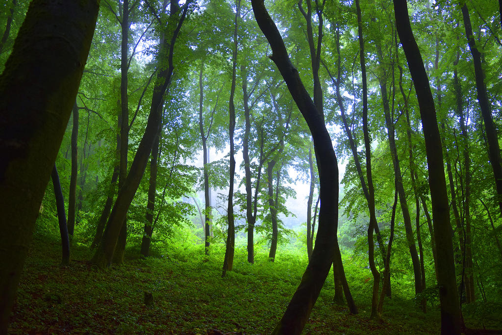When nature awakens by DavidMnr