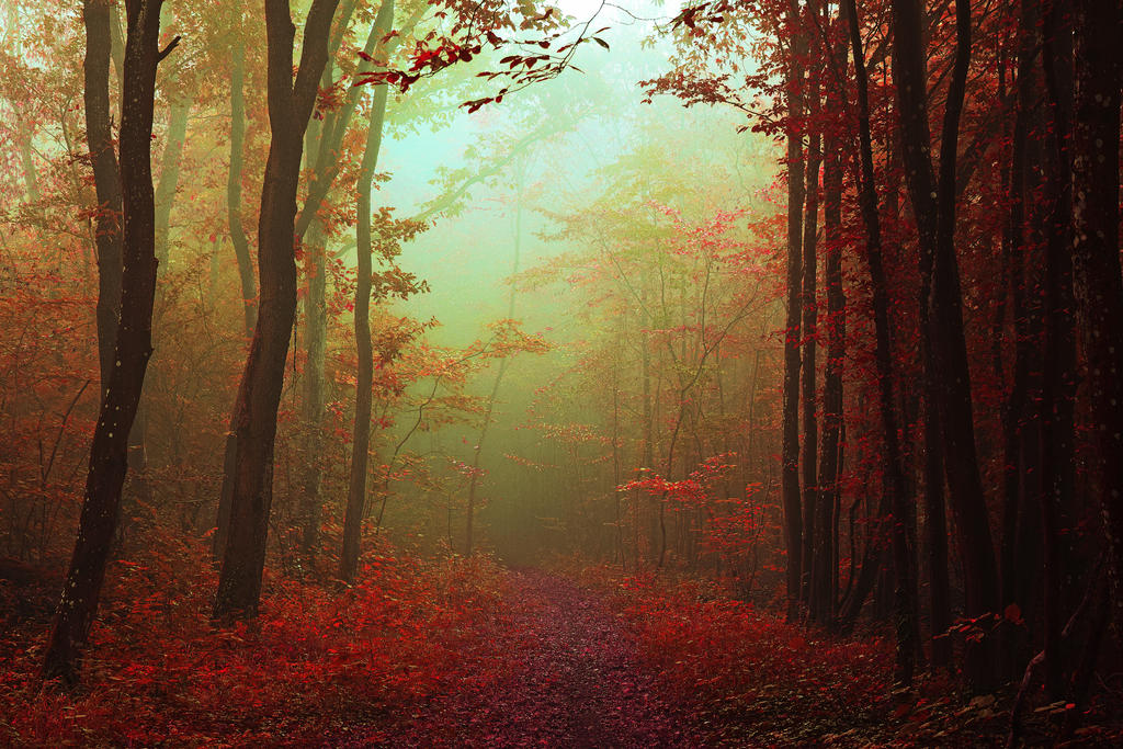 Mystic path by Davvid54