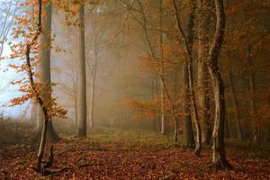 November Memories by DavidMnr
