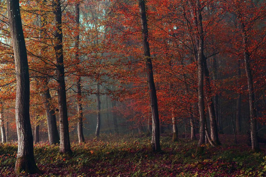 Autumn Symphony by DavidMnr