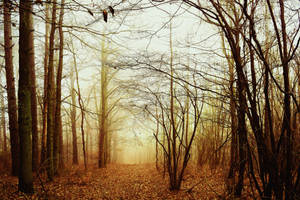 Supernatural by DavidMnr