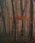 Forest (2) by DavidMnr
