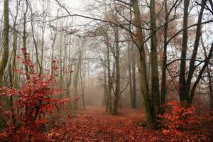 Derniers signes d'automne by DavidMnr