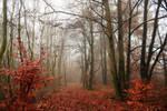 Derniers signes d'automne