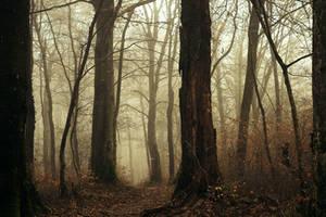Mysterious Morning by DavidMnr
