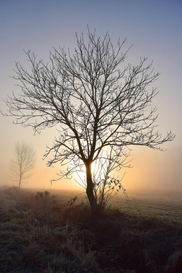 Early morning by DavidMnr