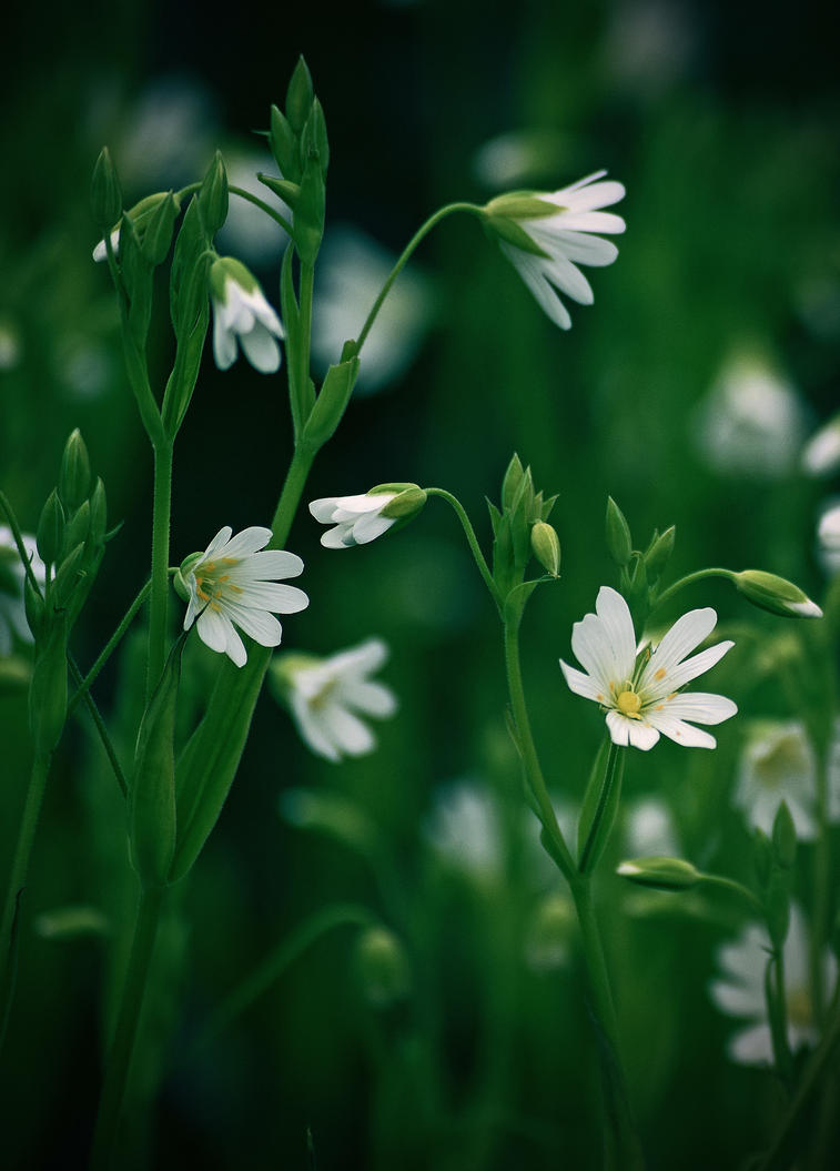 Petites fleurs by DavidMnr