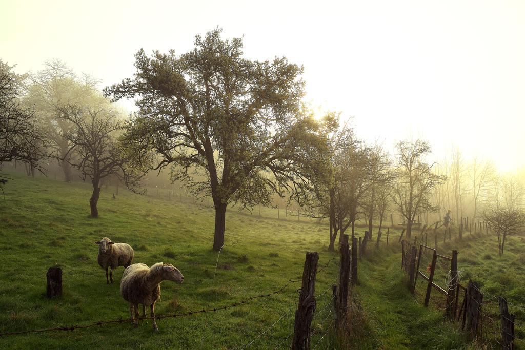 Campagne/countryside by DavidMnr