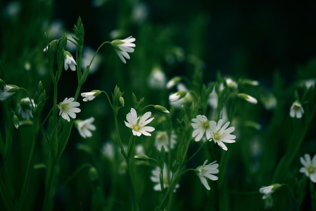 les_fleurs_by_davidmnr-db8ubz8