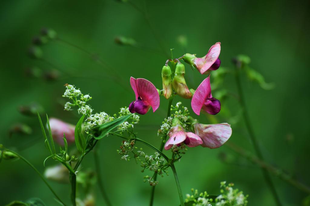 tiny_flowers_by_davidmnr-dbfixcp