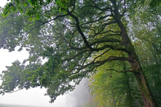 L'arbre/The tree