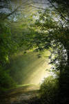 Une douce lumiere/ A sweet light by DavidMnr