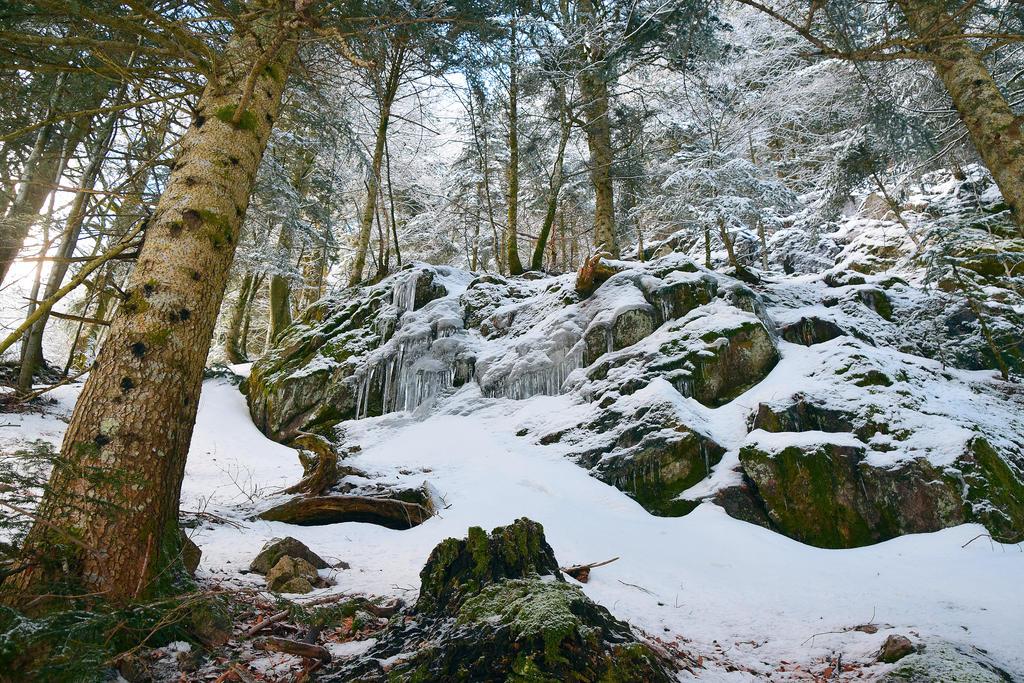 Frozen by DavidMnr