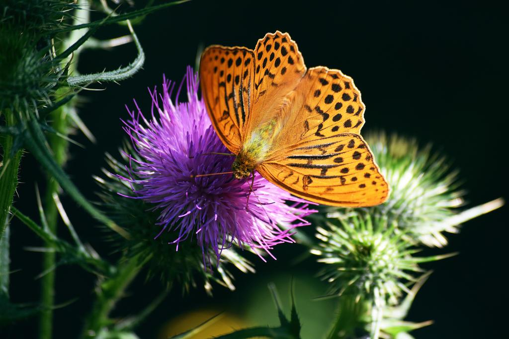 Le papillon by DavidMnr