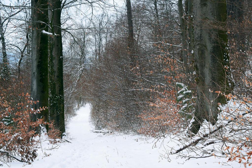 Dans les bois by DavidMnr