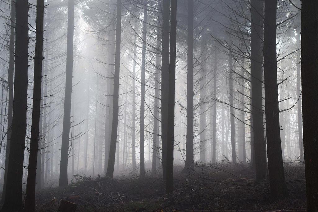 Ombres et silence by DavidMnr