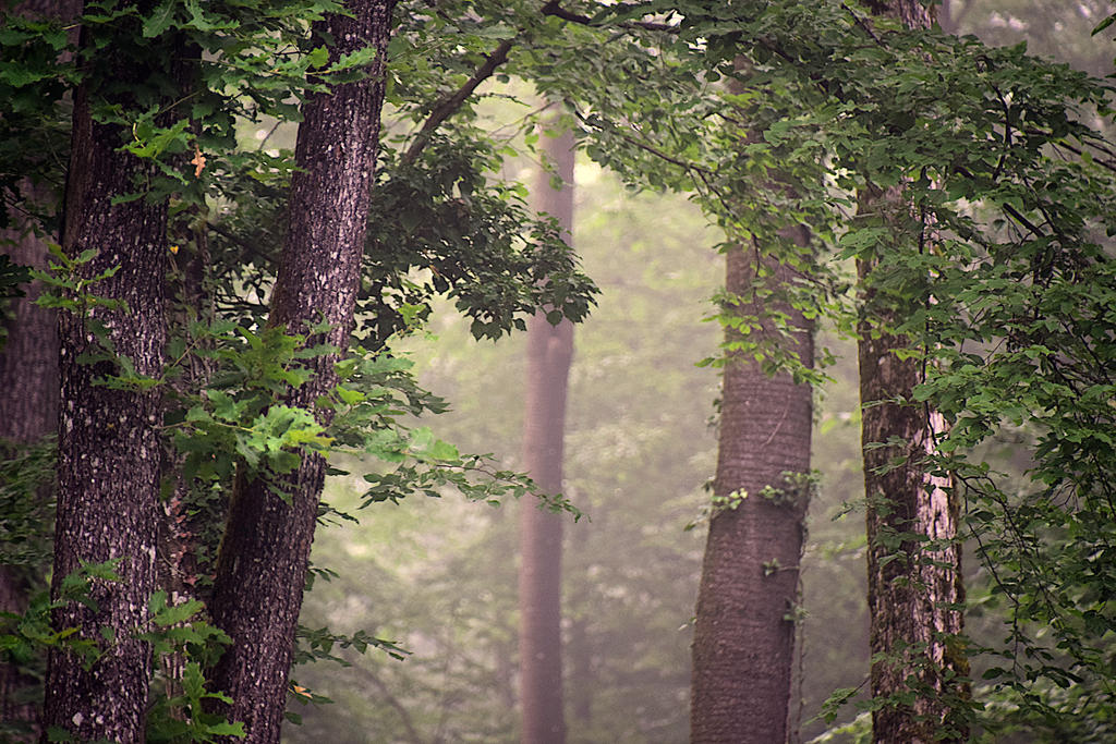 Essences  naturelles by DavidMnr