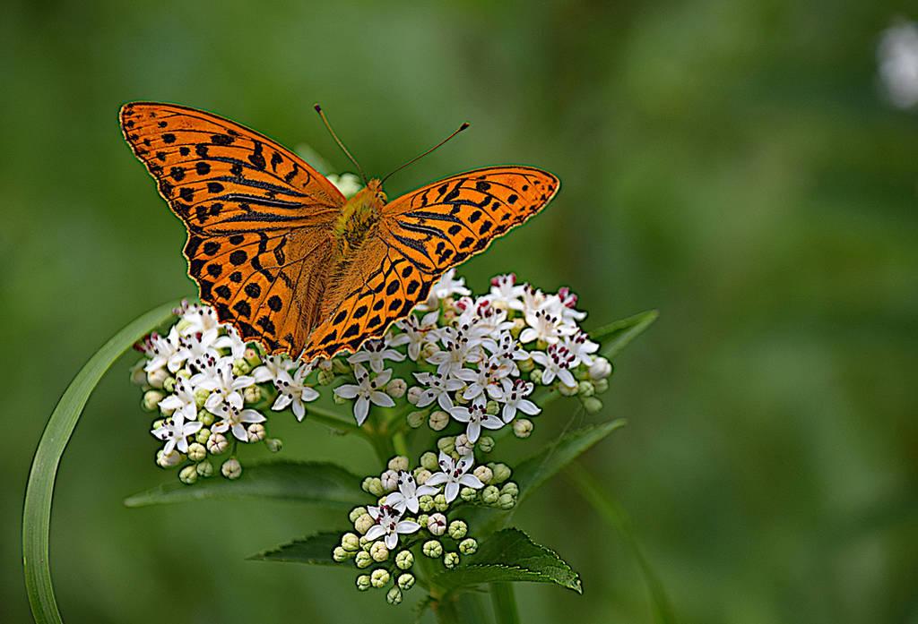 le papillon et la fleur by DavidMnr