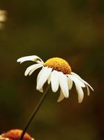 la fleur by DavidMnr