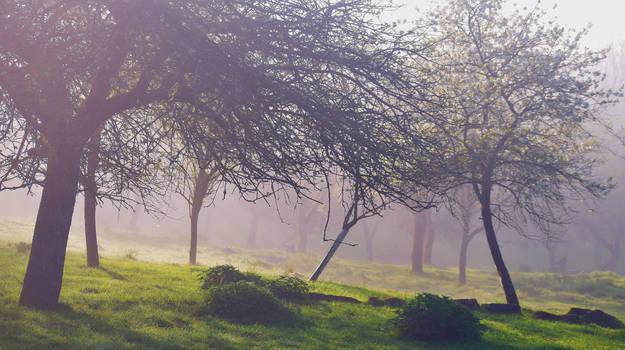 Spring/printemps