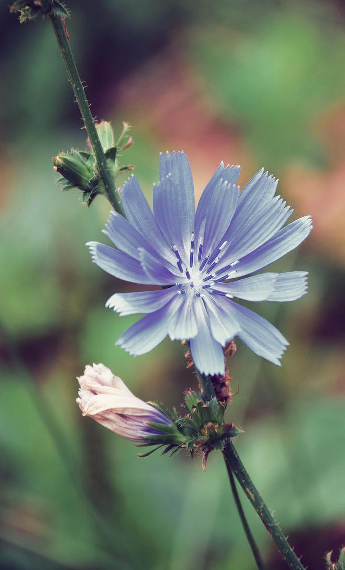 Petite fleur by DavidMnr