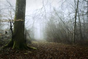 Old path by DavidMnr