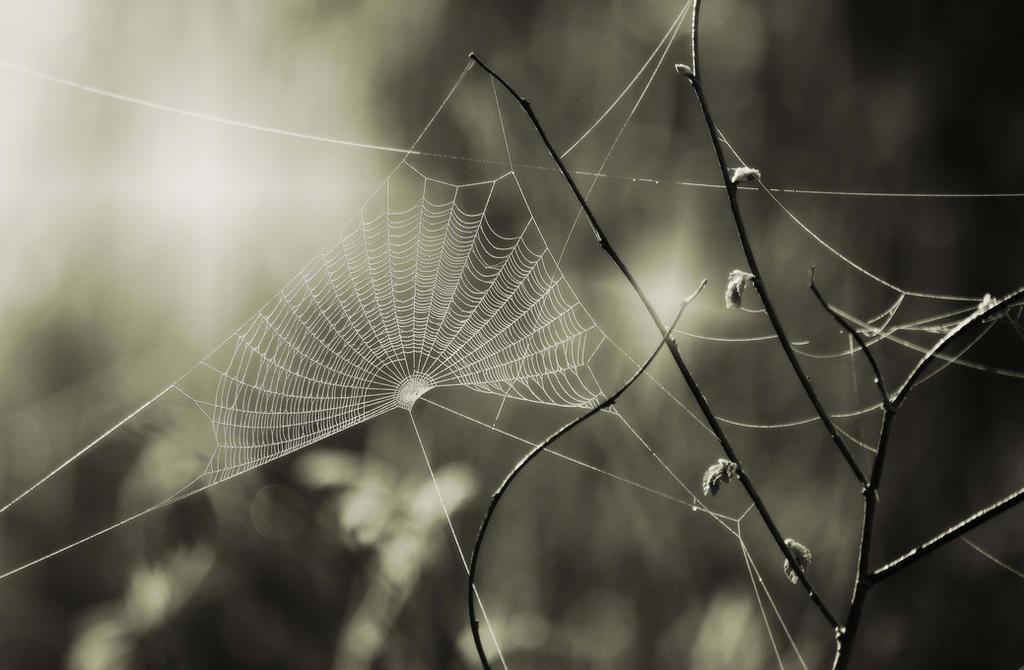 Web by DavidMnr