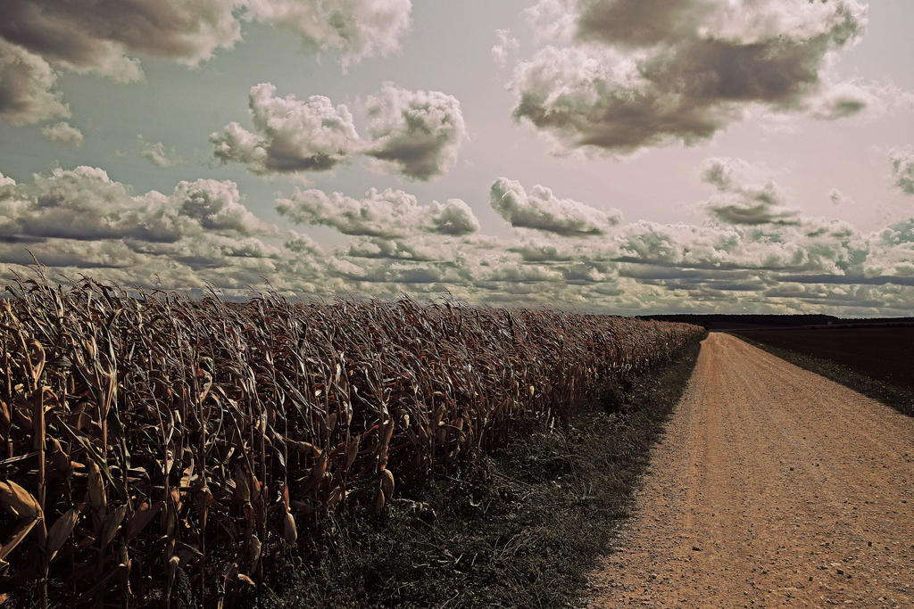 Un long chemin by DavidMnr
