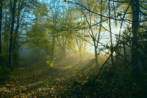 Light is life by DavidMnr