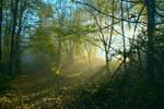 Light is life