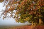 Histoires d'automne
