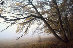 Sous les arbres by DavidMnr