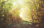 Path of light/chemin de lumiere