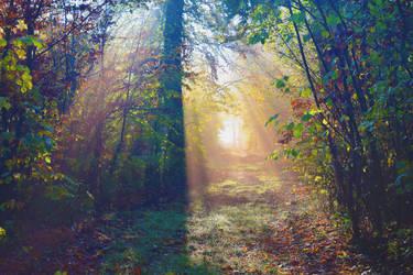 Chemin de lumiere by DavidMnr