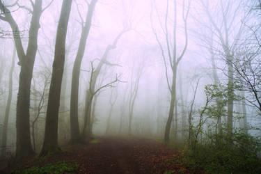 Le chemin des ombres by DavidMnr