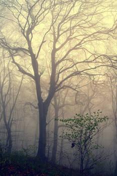 Petit arbre deviendra grand by DavidMnr