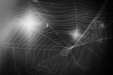 Web (2) by DavidMnr