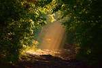The light/la lumiere by DavidMnr