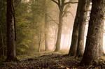 Dans un profond silence (2)