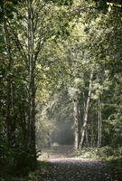 Le chemin/The path