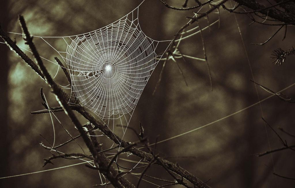 web (3)