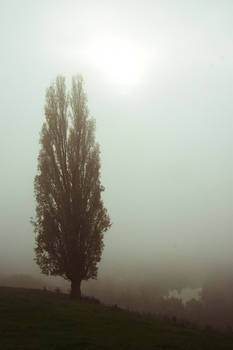 Dans le brouillard/ In the fog
