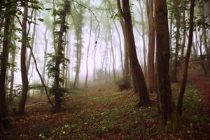 Dans les bois/into the wild