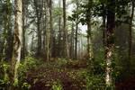 Sous-bois/Undergrowth