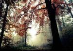 Tree Memories by DavidMnr